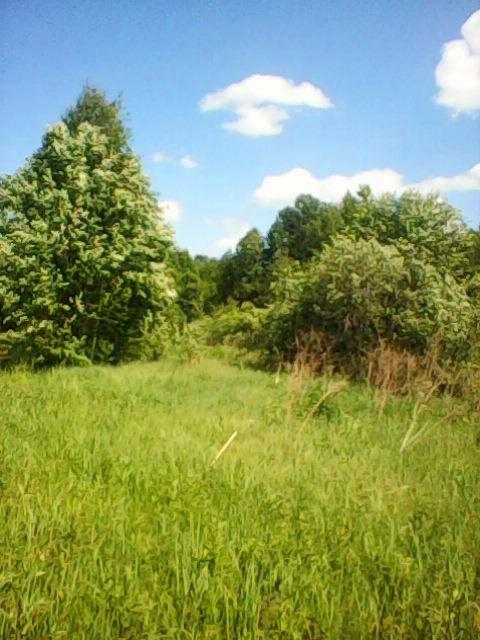 Место, где ранее была расположена усадьба Цевловских в селе Погорелое.